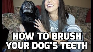 How To Brush Dogs Teeth With Essential Oxygen Hydrogen Peroxide