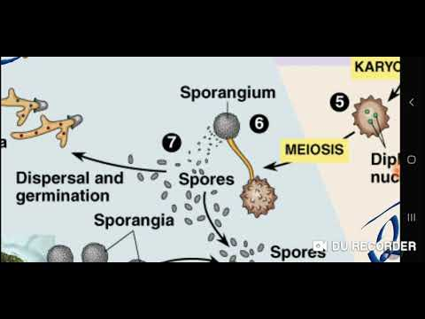 Remedii pentru paraziți protozoici