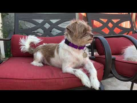 Gia, an adopted Terrier in Santa Monica, CA