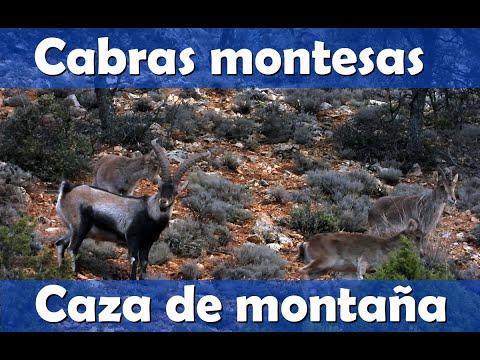 Caza de montaña con Tikka y Burris