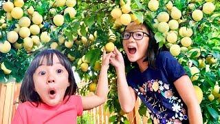 Our Home Garden - Plum Tree Harvest & Fruit Mukbang