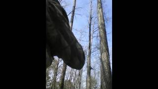 "Turkey Calling"" Pileated Woodpecker/ Crow"