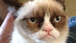 Try Not To Laugh :  Grumpy Cat Edition