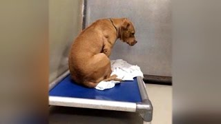 Depressed Dog Facing Wall After Being Rejected By Shelter is Now All Smiles