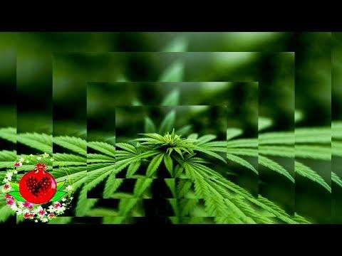 6 растений,которые также содержат исцеляющие каннабиноиды!