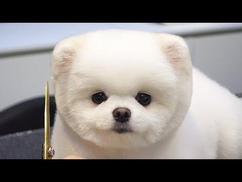 Suloinen koira parturissa