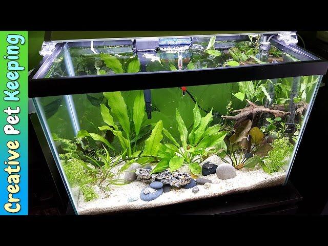 HOW TO setup a 20 Gallon Planted Aquarium
