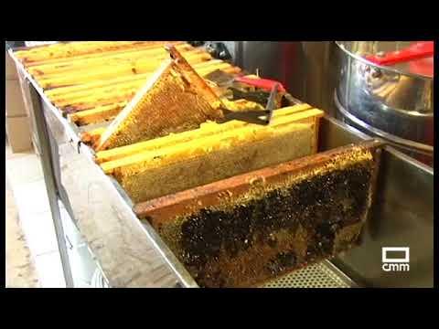 Fotograma del vídeo: Apicultores y abejas, guardianes de los Ecosistemas