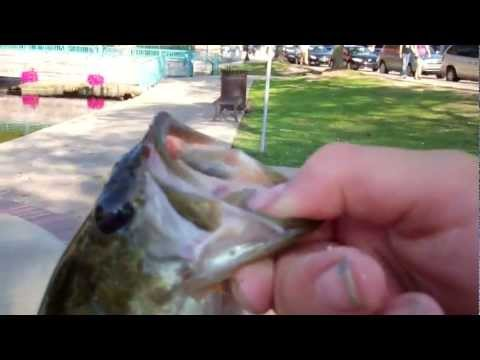 Bass and Perch Fishing  at the Brighton Mill Pond