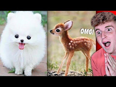Try Not To Say AWW Challenge! (IMPOSSIBLE)