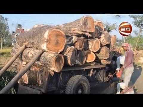 জয়পুরহাটে জেলা পরিষদের সহযোগিতায় গাছ কাটার অভিযোগ ঠিকাদারের বিরুদ্ধে