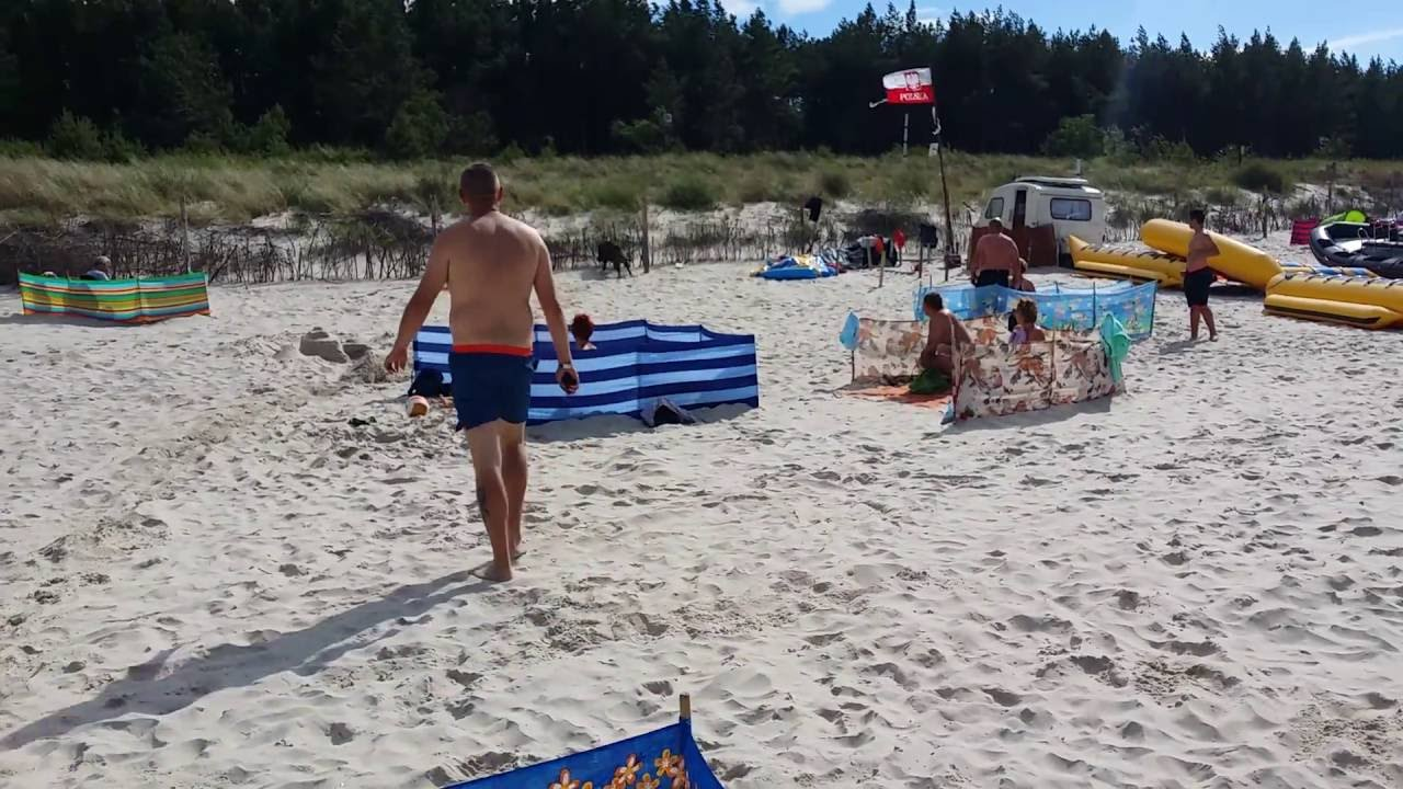 Дикий кабан, выбежавший из моря, устроил переполох на польском пляже
