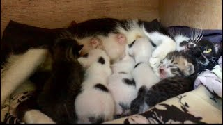 The Mother Cat Brought Her Five Kittens to My House