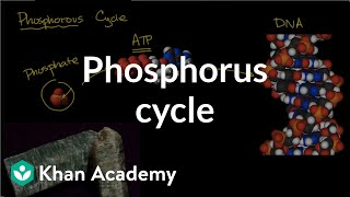 Phosphorous cycle | Ecology | Khan Academy
