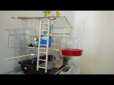 Кеша купается в купалке Trixie