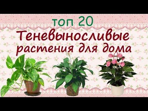 Теневыносливые растения для дома//ТОП 20