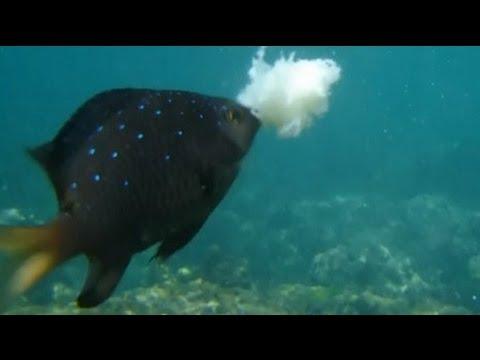 Snorkelen in Bali