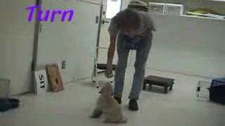 Puppy training 6 1/2 to 7 weeks