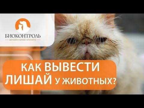 Лишай у животных. ✂ Как вылечить лишай у животных? Биоконтроль.