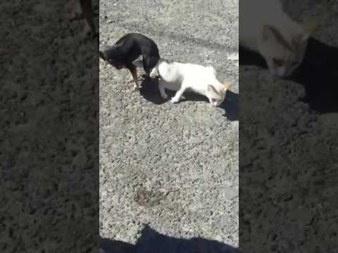 A dog fucking a cat