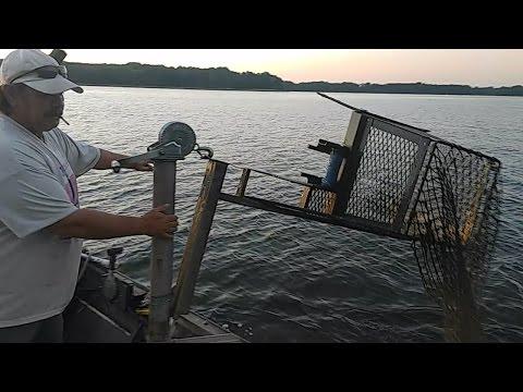Carpa di trofeo da pesca di video