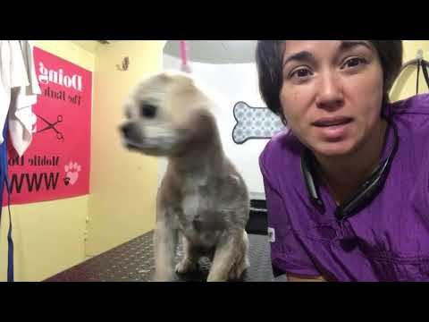 Extreme Anxiety Dog Grooming 090817