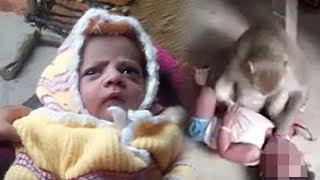 Bayi 12 Hari Direbut Monyet dari Ibunya saat Menyusui, Digigit di Kepala hingga Tewas