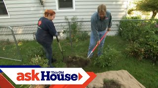 How to Transplant a Rose Bush | Ask This Old House