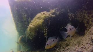 preview picture of video 'GoPro, Cenote Azul en Bacalar Quintana Roo'