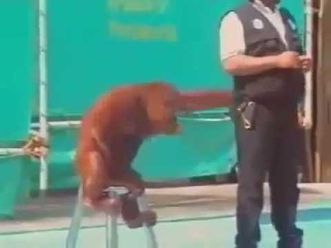 Chú Khỉ Hài Hước