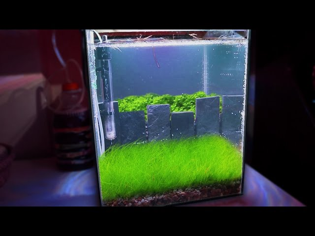 HOW TO: Making a NANO Crystal Red Shrimp Planted Aquarium | TonyTanks