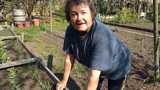 Tavaszi tippek | Retek és saláta