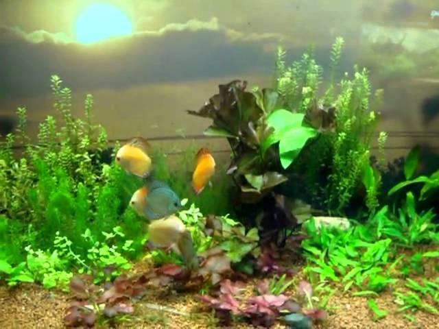 Planted discuss Tank.  Designed By Jabbar  Aquarium design india, Chennai.   Cell: 9840 71 74 97