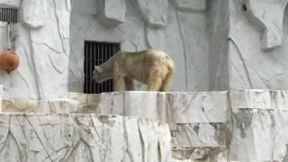 Angry bear in Zoo