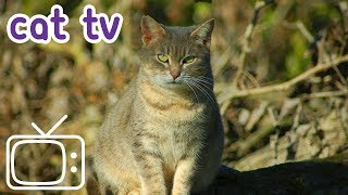 Cat TV: Videos for Cats | 4 Hours of Exciting Cat Games!