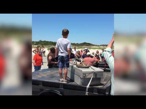 Ten-foot alligator removed from East Beach on St. Simons Island