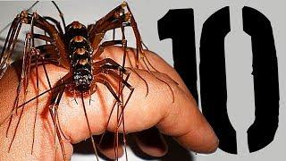 10 najniebezpieczniejszych OWADÓW [TOPOWA DYCHA]