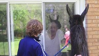 Pony and llama surprise Groton nursing home residents with visit