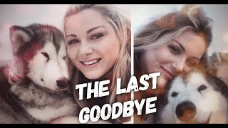 Woman Made The Last Wish of Her Dog Become True Before Giving Him A Forever Sleep