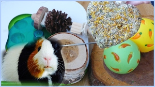 All Of My Guinea Pigs Chews & Toys