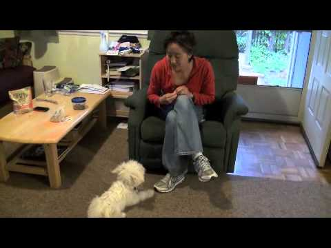 Teaching a Dog to Sit Politely Rather than Jump