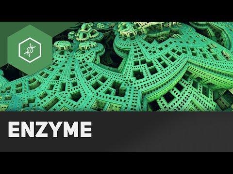Enzyme ● Gehe auf SIMPLECLUB.DE/GO & werde #EinserSchüler