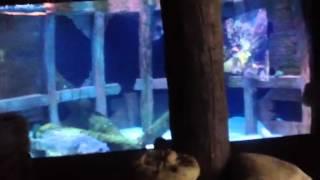 Downtown Aquarium Houston tx