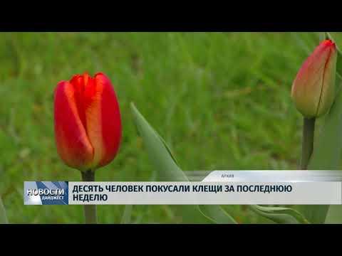 Новости Псков 20.03.2020/ Десять человек покусали клещи за последнюю неделю
