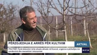 AKTUAL - Kultivimi i arrave në Mleqan 24.11.2020