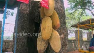 On sale is the Mandu ki Imli or Baobab fruit