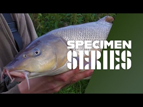 Barbelfiskeri i England