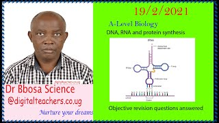 DNA, RNA and protein synthesis objective questions