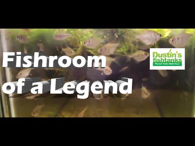 Aquarium Fish Room of a Legend Mike Barber, AWESOME Aquarium Setups