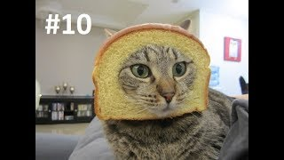 ПОПРОБУЙ НЕ ЗАСМЕЯТЬСЯ - Смешные Приколы с Животными до слез, смешные коты #10